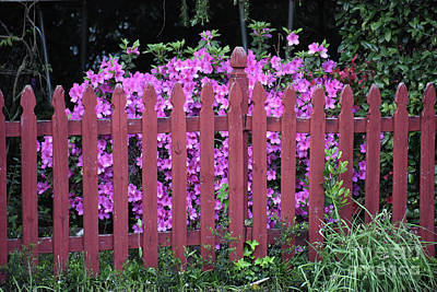 Purely Purple - Behind The Fence by Skip Willits