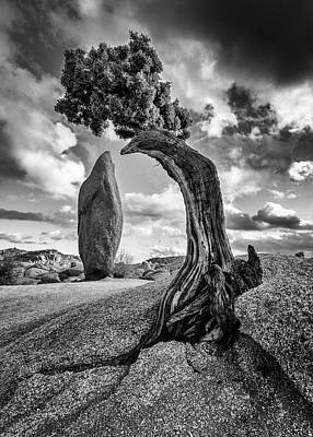 Christmas Christopher And Amanda Elwell - Bent But Not Broken - Joshua Tree National Park by Stephen Stookey