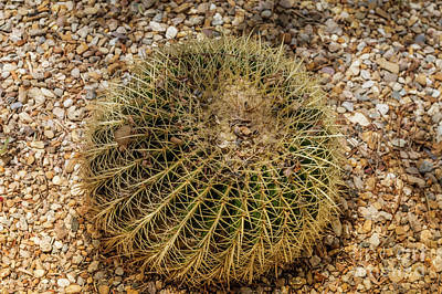 Photograph - Big cactus in Almeria, Spain by Beautiful Things