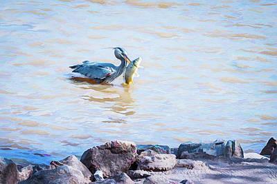 Animals Photos - Big Catch of the Day by Debra Martz