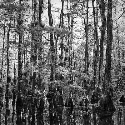 Amy Weiss - Big Cypress Swamp -1 by Rudy Umans