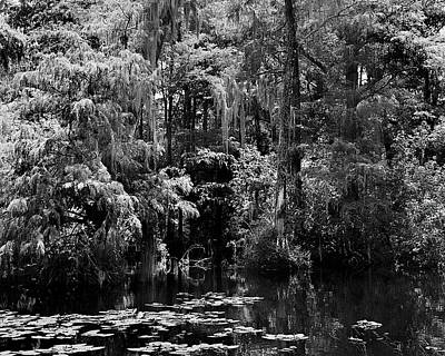 Mannequin Dresses Rights Managed Images - Big Cypress Swamp -2 Royalty-Free Image by Rudy Umans