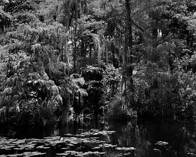 Wild Weather - Big Cypress Swamp -2 by Rudy Umans