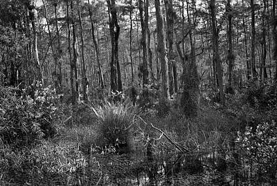 Mannequin Dresses Rights Managed Images - Big Cypress Swamp -4 Royalty-Free Image by Rudy Umans