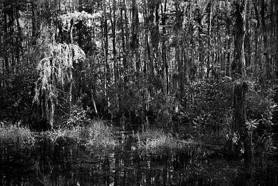 Mannequin Dresses Rights Managed Images - Big Cypress Swamp -5 Royalty-Free Image by Rudy Umans
