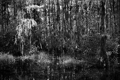 Wild Weather - Big Cypress Swamp -5 by Rudy Umans