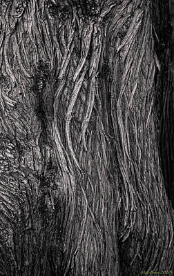 Modern Feathers Art - Big Sur tree 920 -9 by Mike Penney