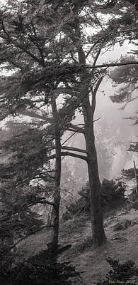 Vintage Signs - Big Sur trees 920 04 by Mike Penney