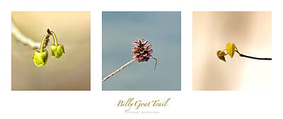 Kids Cartoons - Billy Goat Trail Branches Triptych by Francis Sullivan