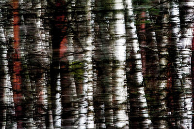 Photograph - Birch-Tree Forest by Julia Chodor