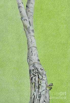 Drawings Royalty Free Images - Birch Tree Royalty-Free Image by Glenda Zuckerman
