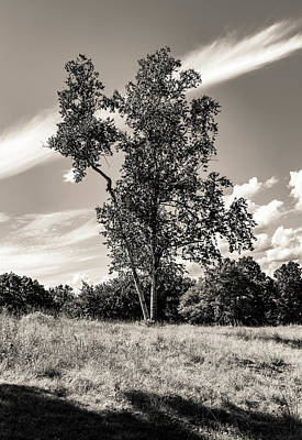 Man Cave - Birch Tree in Summer at Quabbin Reservior BW by Michael Saunders