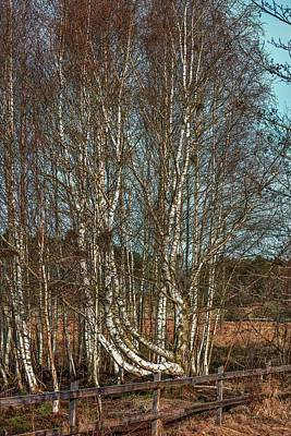 Keith Richards - Birches #j7 by Leif Sohlman