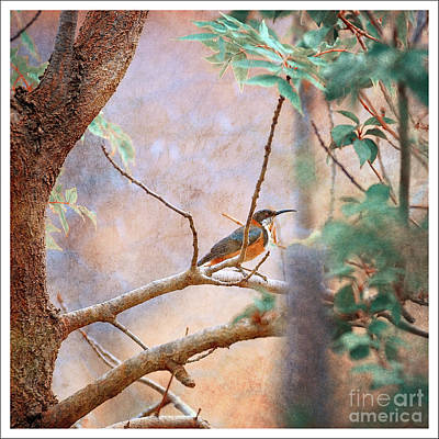 Photograph - Spinebill by Russell Brown