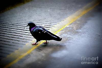 Frank J Casella Royalty-Free and Rights-Managed Images - Bird Dancing on the Line by Frank J Casella