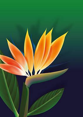 Digital Art - Bird of paradise flower illustration by David Greenaway