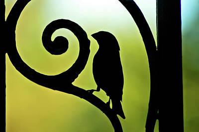 Photograph - Bird on Ornamental Iron by Anthony M Davis