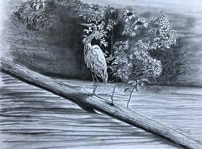 Animals Drawings - Bird Watching  by Tony Clark