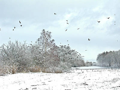 Rusty Trucks - Birds flying by Jean Schweitzer