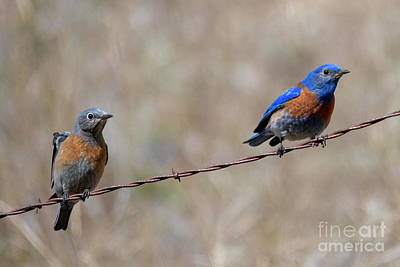 Animals Royalty-Free and Rights-Managed Images - Birds on a Wire by Mike Dawson