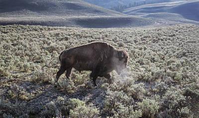 Safari - Bison Breath II by Joan Carroll