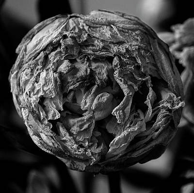 Pittsburgh According To Ron Magnes - Black And White Peony by Clive Beake