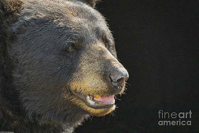 Have A Cupcake - Black Bear Profile by Mitch Shindelbower