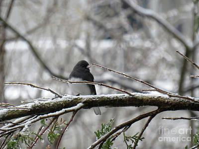 Wine Corks - Black eyed junco on a frozen branch in winter by Celine Bisson