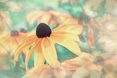 Design Pics - Black Eyed Susan Peachy Pastels  by Carol Japp