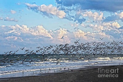 Pineapple - Black Skimmers Take Off by Catherine Sherman