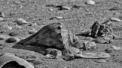Wilderness Camping - Black Whelk on the Beach by Fon Denton