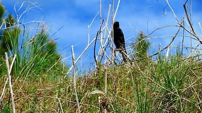 Photograph - Blackbird 03 by Jean Evans