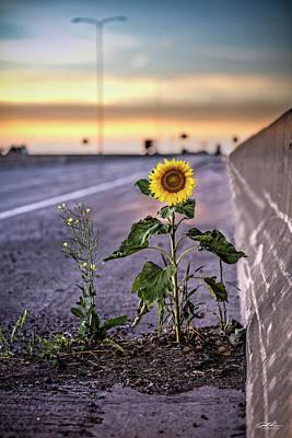 Photograph - Blatnik Sunflower by Joe Polecheck