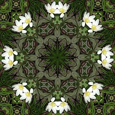 Photograph - Bloodroot Kaleidoscope 2 by Valerie Kirkwood