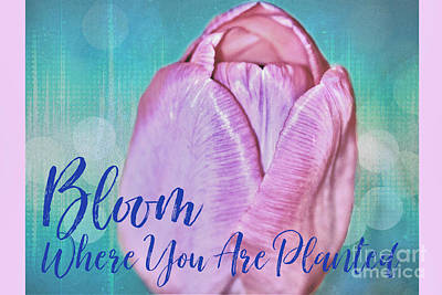 Angels And Cherubs - Bloom Where You Are Planted by Diann Fisher