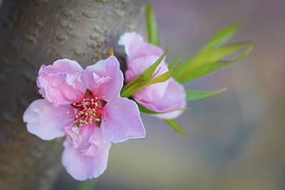 Spot Of Tea - Blossom Time2 by Joan Baker