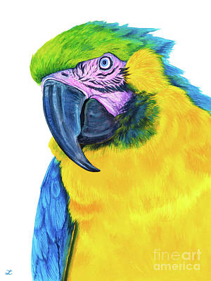 Royalty-Free and Rights-Managed Images - Blue-and-Yellow Macaw by Zaira Dzhaubaeva