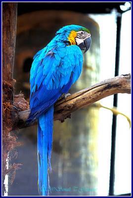 1920s Flapper Girl - Blue Macaw by Sonali Gangane