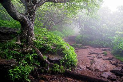 Animal Portraits - Blue Ridge Parkway North Carolina Craggy Fog by Robert Stephens