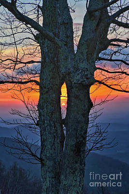 Graduation Sayings - Blue Ridge Parkway Sunrise - Through The Tree by Kerri Farley