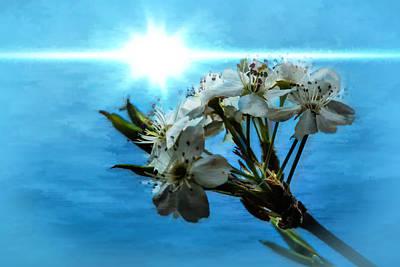 Katharine Hepburn - Blue Spring by Jim Love