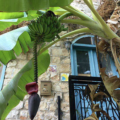 Fun Patterns - Blue Window with Bananas by Cynthia Zimmerman