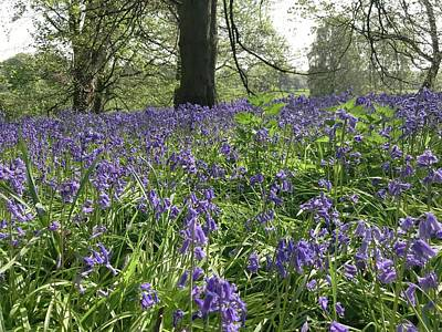 Royalty-Free and Rights-Managed Images - Bluebell Wood by Luisa Millicent