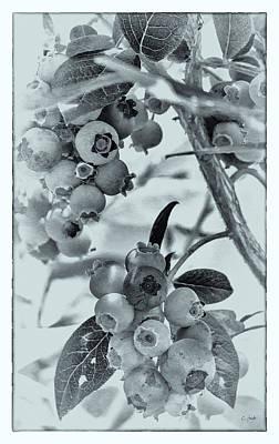 Pittsburgh According To Ron Magnes - Blueberry Season by Carol Senske