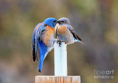 Game Of Chess - Bluebird Kiss by Mike Dawson