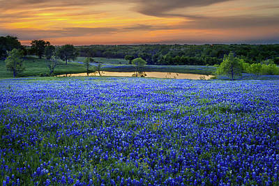 Floral Royalty-Free and Rights-Managed Images - Bluebonnet Lake Vista Texas Sunset - Wildflowers landscape flowers pond by Jon Holiday