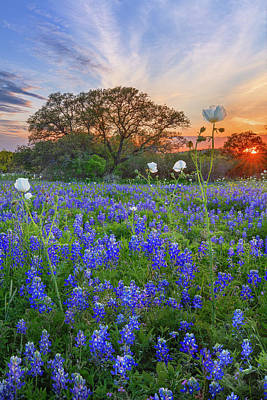 Tina Turner - Bluebonnets and Poppies at Sunset - Texas Hill Country 3341 by Rob Greebon