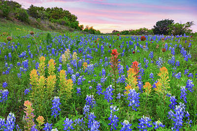 Keith Richards - Bluebonnets and Prairie Paintbrush in the Hill Country 4082 by Rob Greebon