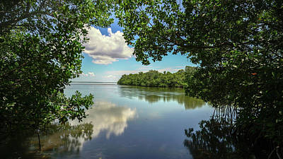 World Forgotten Rights Managed Images - Boca Grande Mangrove View Royalty-Free Image by Joey Waves