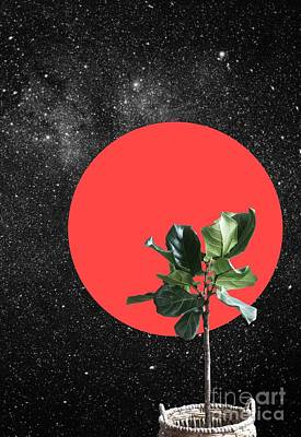 Surrealism Royalty-Free and Rights-Managed Images - Bonsai by Hessl Jonathan